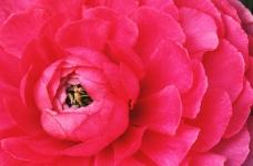 鲜花盛开0174