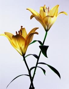 花姿招展0041
