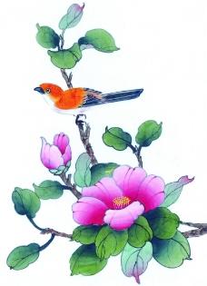 花鸟国画0070