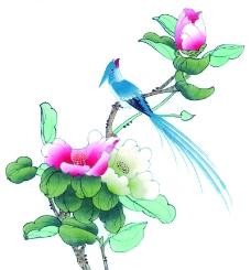 花鸟国画0065