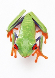 壁虎青蛙0053