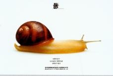 中国广告0127