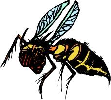 昆虫蝴蝶0763