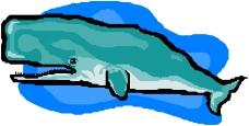 海洋动物0258
