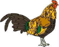 鸟类动物0027