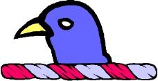 鸟类动物0182