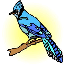 鸟的天堂0465