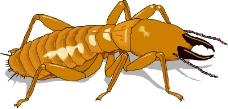 昆虫蝴蝶0946