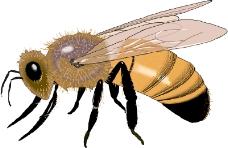 昆虫蝴蝶0988