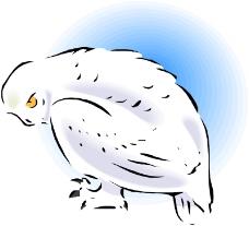 鸟的天堂0333