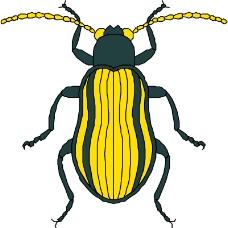 昆虫蝴蝶0737