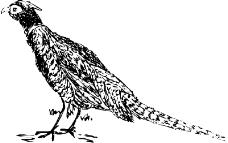 鸟类动物0059