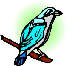 鸟的天堂0621