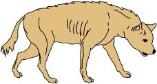 珍稀动物0317
