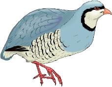 鸟类动物0043