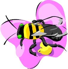 昆虫蝴蝶0730