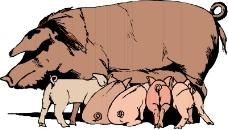 珍稀动物1007