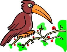鸟类漫画0085