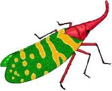 昆虫蝴蝶0130