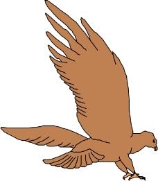 鸟类动物0185