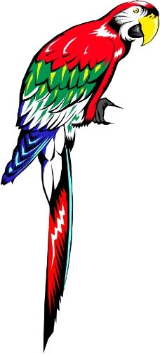 鸟的天堂0706