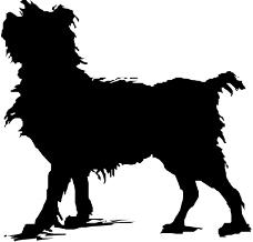 珍稀动物0216