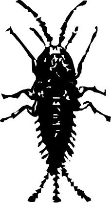 昆虫蝴蝶0301