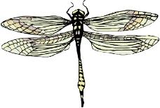 昆虫蝴蝶1008