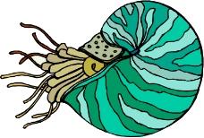 海洋动物0553