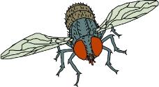 昆虫蝴蝶0759