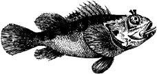 海洋动物0839