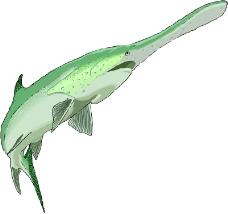 海洋动物0721