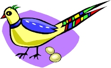 鸟的天堂0719
