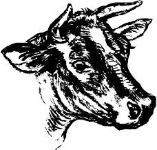 珍稀动物0941