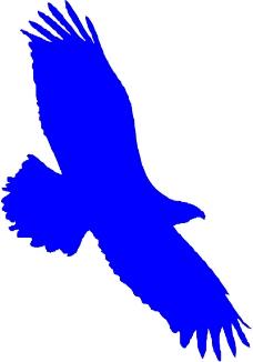 鸟类动物0202