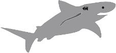 海洋动物0015