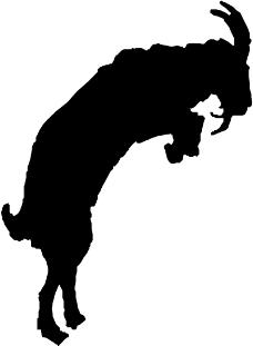 珍稀动物0068