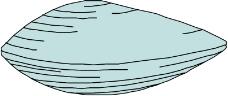 海洋动物0026