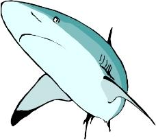 海洋动物0093