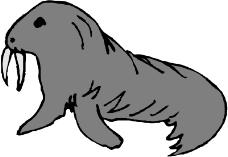 海洋动物0172