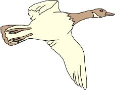 鸟类动物0186