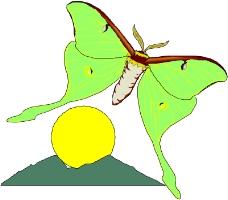 昆虫蝴蝶0831