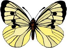 昆虫蝴蝶0926
