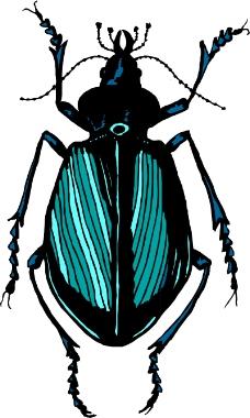 昆虫蝴蝶0961