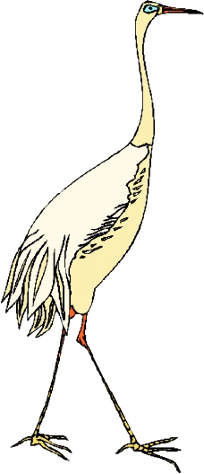 鸟的天堂0234