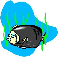 海洋动物0253