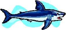 海洋动物0308