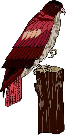 鸟类动物0080