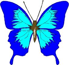 昆虫蝴蝶0125