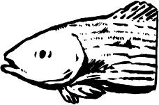 海洋动物0482